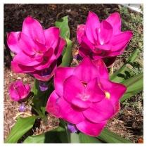 Mom's Flowers